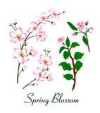 Иллюстрация вектора цветения весны иллюстрация штока
