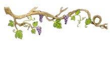 Иллюстрация виноградины нарисованная рукой бесплатная иллюстрация