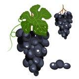 Иллюстрация виноградин стилизованная изолированная, яркий цвет шаржа иллюстрация штока