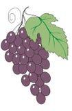 иллюстрация виноградин Стоковые Фото