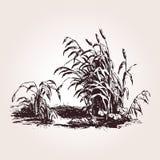 Иллюстрация выгравированная сбором винограда Стоковое фото RF