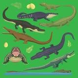 Иллюстрация гада вектора зеленого цвета аллигатора крокодила стиля шаржа собрания диких животных установленного Зеленый цвет шарж Стоковое Фото