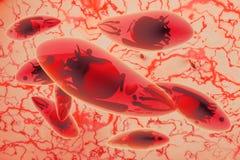 Иллюстрация заболеванием 3D токсоплазмоза gondii Toxoplasma Стоковое Изображение