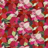 Иллюстрация звезды рождества Poinsettia безшовная иллюстрация вектора