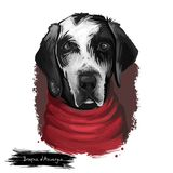 """Иллюстрация искусства породы собаки щенка Braque d """"Auvergne цифровая изолированная на белизне Популярный портрет щенка с текстом иллюстрация вектора"""