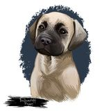 Иллюстрация искусства portarait собаки породы щенка Bullmastiff цифровая бесплатная иллюстрация