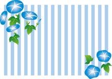 Иллюстрация и рамка цветка славы утра stripe предпосылка Стоковые Фотографии RF