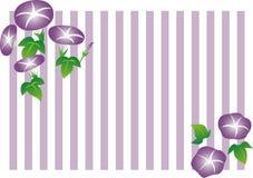 Иллюстрация и рамка цветка славы утра stripe предпосылка Стоковое фото RF