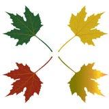 Иллюстрация кленовых листов красная зеленая желтая Стоковое Изображение RF