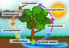 Иллюстрация концепции цикла воды стоковые фото