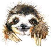 Иллюстрация лени акварели тропическое животное