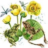 иллюстрация лягушки озера Стоковая Фотография RF