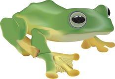 иллюстрация лягушки Стоковые Изображения