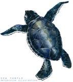 Иллюстрация морской черепахи акварели Стоковое Изображение