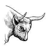 Иллюстрация нарисованная рукой быка Стоковые Изображения