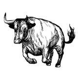 Иллюстрация нарисованная рукой быка Стоковая Фотография RF