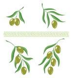 Иллюстрация оливковых веток и греческие meandros орнаментируют щетку для дизайна стоковое фото rf