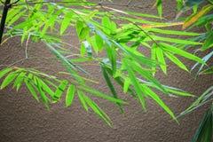 иллюстрация предпосылки bamboo выходит вектор Стоковые Изображения