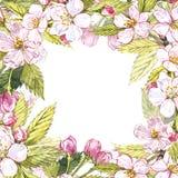 Иллюстрация рамки Яблока ботаническая Дизайн карточки с цветками и лист яблока Изолированная иллюстрация акварели ботаническая Стоковое фото RF