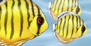 иллюстрация рыб discus тропическая Стоковая Фотография RF