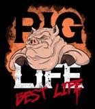 Иллюстрация свиньи бандита Стоковые Фотографии RF