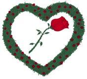иллюстрация сердца bushes подняла Стоковая Фотография RF