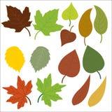 Иллюстрация символов природы листьев стоковые изображения rf