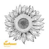 Иллюстрация солнцецвета нарисованная рукой Стоковые Изображения