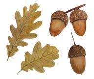 Иллюстрация установила акварели листьев и жолудей дуба иллюстрация штока