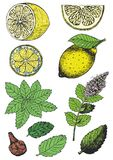 Иллюстрация цвета различных ингридиентов для выпивать чая Стоковые Фотографии RF