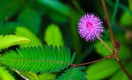 иллюстрация цветка зеленая выходит розовый вектор Стоковые Изображения
