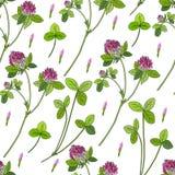 Иллюстрация цветка поля shamrock красного клевера одичалой нарисованная рукой красочная изолированная на белой предпосылке, Vecto Стоковое Изображение