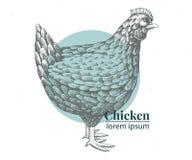 Иллюстрация цыпленка вектора нарисованная рукой Ретро стиль гравировки Чертеж животноводческой фермы эскиза Шаблон логотипа куриц стоковая фотография