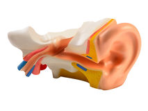 иллюстрация человека уха иллюстрация штока