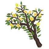 Иллюстрация чувствительной ветви весны Стоковые Изображения