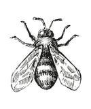 Иллюстрация эскиза пчелы иллюстрация штока