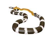 иллюстрация 3D короля змейки Калифорнии заглатывая желтую змейку Стоковое Фото