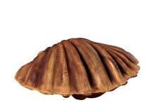 иллюстрация 3d seashell Иллюстрация вектора