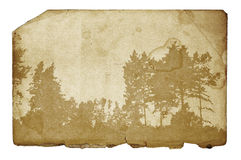 иллюстрация grunge пущи предпосылки Стоковое Изображение RF