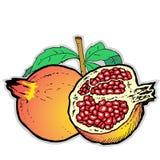 Иллюстрация Pomegranates Стоковое фото RF