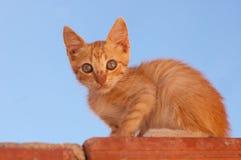 имбирь кота милый Стоковая Фотография