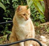 имбирь сада кота Стоковое фото RF