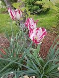 имеет весну быть поскаканным стоковое изображение