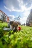 Имейте нового щенка Стоковое фото RF