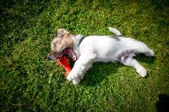 Имейте нового щенка Стоковая Фотография RF