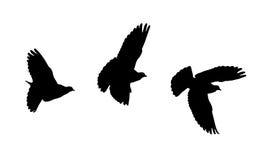 имеющиеся силуэты eps птицы Стоковое Изображение