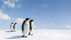 император спаривает пингвинов Стоковое Изображение