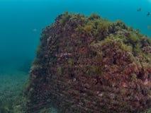 Император Claudio's Ninfeum подводный, археология стоковая фотография rf