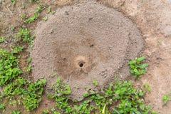 Империя муравья, насекомое живой природы Стоковое фото RF