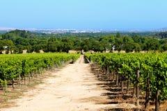 Имущество вина constantia Groot Стоковое Фото